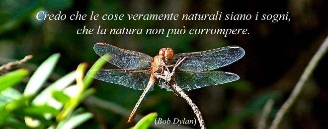 citazione_gallery_oasi_naturalistiche