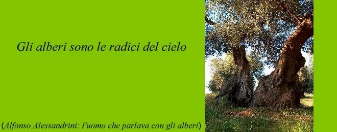 citazione_gallery_ulivi