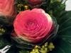 fiore_cavolo
