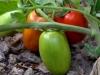 3-pomodori_tomatoes